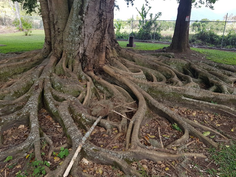 Tree in park near ruins